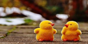 chicks-1159195_960_720